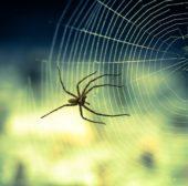 Tipps gegen Spinnen im Haus